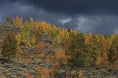 Aspen Rain (f/Kat) Tags: gtnp grandtetonnationalpark wyoming autumn fall aspen reflections