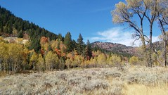 Pretty fall colors 2 (Aggiewelshes) Tags: phone stylo september 2016 hiking jardinejuniper fallcolors landscape scenery trees