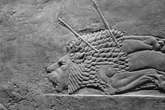 Assyrian Lion hunt I, British Museum (arklologist) Tags: assyrian lion hunt british museum