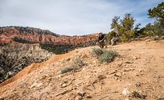 Steve at the Hat Shop (Serendigity) Tags: brycecanyonnationalpark selfie usa landscape nature outdoors hiker unitedstates utah