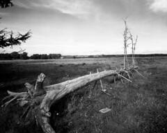 Fallen spruce (Theolde) Tags: lf 4x5 rodenstock grandagon6890 fomapan100 r09studio11510min