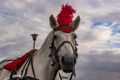 horse () Tags: canon russia horse rider novgorod animal