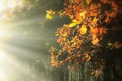 Seasons. Explore (eddieELM) Tags: ireland irlanda irlande monaghan scotshouse forest woods autumn fall canon morning kissx5 rebelt3i explore