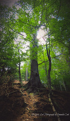 Less Traveled (1 of 1) (amndcook) Tags: landscape michigan munising munisingfalls outdoors hiking nature path sunlight tree upperpeninsula wildlife