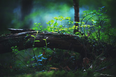 Please, tell me about the forest.. (I) (MaaykeKlaver) Tags: forest magic stories tell green plants light dark nature legends trunk tree leaves