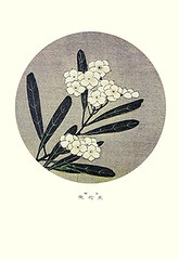 Oleander (Japanese Flower and Bird Art) Tags: flower oleander nerium indicum apocynaceae jakuchu ito ukiyo woodblock picture book japan japanese art readercollection