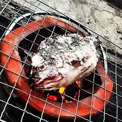 มาแว้ว!! ปลา!! เผา!!