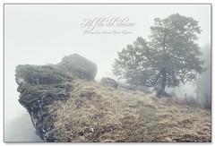 Al filo del abismo ([Antxon Elorza]) Tags: arbol bosque niebla haya navarra precipicio abismo urbasa hayedo