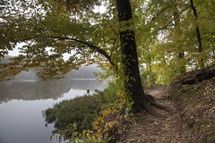 Morning Hike (LarryHB) Tags: autumn lake reflection art nature horizontal fog rural forest landscape path foliage missouri hdr 2012 week42 day293 scottcounty