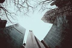 Bryant Park, New York (shaymurphy) Tags: park new york city nyc trees sky america buildings amrica nikon skyscrapers branches fisheye 105 nikkor bryant lolo amerika camerabag stad  d300     lamerica lamrique  nikkor105fisheye dsc3941