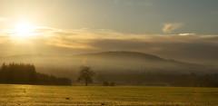 Sunburst (Natasha Bridges) Tags: morning autumn light mist tree sunrise countryside shropshire fields wrekin