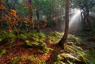 Yarncliff Rays