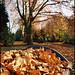 Autumn in the city (5): Herne (Ruhrgebiet / Ruhr region)