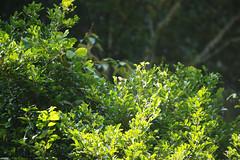 蝴蝶 Butterfly (ddsnet) Tags: butterfly insect sony taiwan 南投 台灣 900 蝴蝶 昆蟲 nantou α α900 生態觀光導覽暨生物多樣性解說員培訓─蝴蝶專業進階認證班