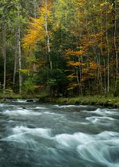 Tableau automnal (Tonton Dave) Tags: autumn nature water forest automne river landscape switzerland eau suisse rivière paysage forêt vaud vallorbe sourcesdelorbe