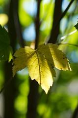 Ambiance automnale (Créamandine) Tags: orange macro nature automne vert paysage marron arbre feuilles baies