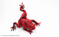 Satoshi Kamiya Origami Tree Frog (Himanshu (Mumbai, India)) Tags: red sculpture india tree art wet animal modern paper japanese origami handmade contemporary craft amphibian frog sapo poison mumbai rana frosch paperfolding folding grenouille satoshi himanshu kamiya orukami