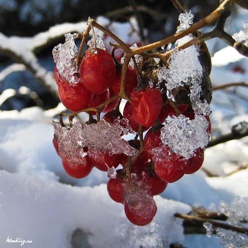 Icy Berries - Baies glacées