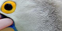 My favorite birds (RURO photography) Tags: voyage travel bird tourism birds canon photography photos vogels reis tourist lonelyplanet oiseau vogel oiseaux nationalgeographic reizen discoverychannel kartpostal enstantane anawesomeshot voyageursdumonde journalistchronicles globalbackpackers discoveryphoto discoveryexpeditions rudiroels inspiredelite funsupershot