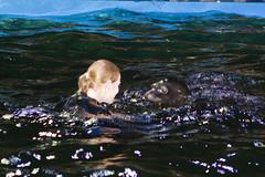 Ouwehands Dierenpark - Zeeleeuwenshow-2517 (Quistnix!) Tags: show netherlands zoo nederland sealion rhenen ouwehands dierenpark zeeleeuw zeeleeuwen 2013 dierenparkouwehands zeeleeuwenshow ouwehandszoo