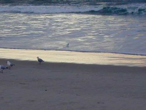 Beach Gold Coast - 27