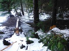 Beaver action near Lily Lake