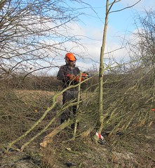 Hedge laying competition 2013 (sadeik) Tags: farm competition hedge axe laying rectory wimpole 2013 billhook
