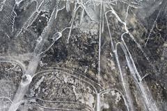Genomskinligt (arkland_swe) Tags: ice is genomskinlig fotosöndag fs130203