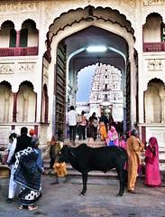India // Rajasthan 2012-10-29