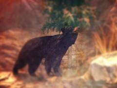 Bear (jeanne.macdougall) Tags: bassproshopsoutdoorworld uploaded:by=flickrmobile flickriosapp:filter=nofilter