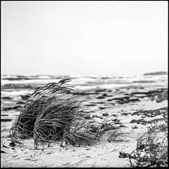 Strmisch.. (Ronny-1976) Tags: 1100min adoxpan25 hiddensee meer rodinal150 strand urlaub wellen wind pentaconsixtl carlzeissjenabiometar28120
