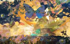 Butterfly Days (Karen McQuilkin) Tags: butterfly daisy summer sunset abstract mountains karenmcquilkin