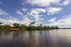 Amazon Jungle (Mark Watson Photography) Tags: mark watson photography by travel amazon peru jungle lima landscape