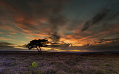 The Lone Tree (steveniceton.co.uk) Tags: lonetree northyorkshiremoors nationalpark sunset tramonto tramonti serene serenity calm peaceful heather moors wilderness nature landscape landscapes canon