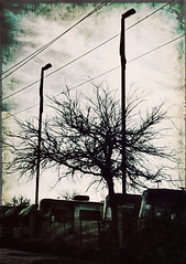 (Photosintheattic) Tags: outdoor tree plant rv rvs evening spooky photoeffects effects flickr poles lines lights lamppost shadows eery trailers powerlines wires rvpark sleeping serene quite calm still