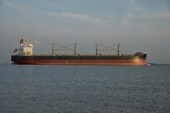 Santa Katarina DST_7050 (larry_antwerp) Tags: santakatarina bulk 9425930 oetker rudolfaoetker schip ship vessel        schelde