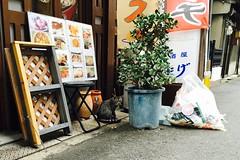 Today's Cat@2016-09-16 (masatsu) Tags: cat thebiggestgroupwithonlycats catspotting cameraphone apple softbank iphone osaka