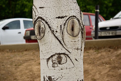 What are you loooking at? (AG-Wolf) Tags: nature naturaleza rbol tree face cara wood tronco