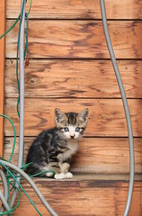 A stray cat 2_7DWF Sunday Fauna (keiko*has) Tags: 7dwf straycat fauna animal
