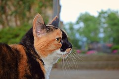 Sometimes ... it takes nine lives to save one (Maria Godfrida) Tags: fauna animals pets cats streetcat maskedcat blackandred spotted speckled
