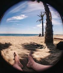 No hay prisa cuando te sientes libre y bien acompaado (Andrea Latasa) Tags: beach marbella ojodepez fisheye objetivo movile spain malaga summer serenity sea palm palmera mar playa playacasablanca sonyz3
