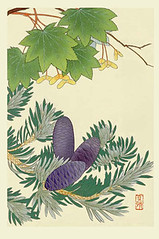Fir and maple (Japanese Flower and Bird Art) Tags: flower fir abies pinaceae maple acer aceraceae masaharu inoue nihonga woodblock print japan japanese art readercollection