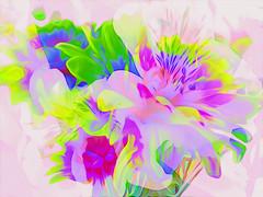 Spring time! (denise.bardauil) Tags: abstract vividcolors flowers digitalart nikon