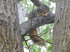 Squirrel (Andrew Penney Photography) Tags: squirel sunday nature tree
