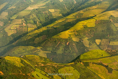 Y9470.0916.Lng Chiu.Bc Yn.Sn La (hoanglongphoto) Tags: asia asian vietnam northvietnam northwestvietnam outdoor landscape scenery morning sunlight sunnymorning mountain flank terraces teracedfields terracedfieldslandscape terracedscene harvest canon canoneos1dx canonef70200mmf28lisiiusmlens tybc snla bcyn ngoitri buisng nng nngsm ni snni rungbcthang lachn magt phongcnhtybc phongcnhbcyn lngchiu rungbcthanglngchiu landscapeinvietnam vietnamscenery