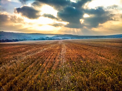 Morning walk around the meadow (Hasan Yuzeir) Tags: morning day walk meadow sun cloud sky forest landscape light sunlight hasanyuzeir lg k8 wheat field fog