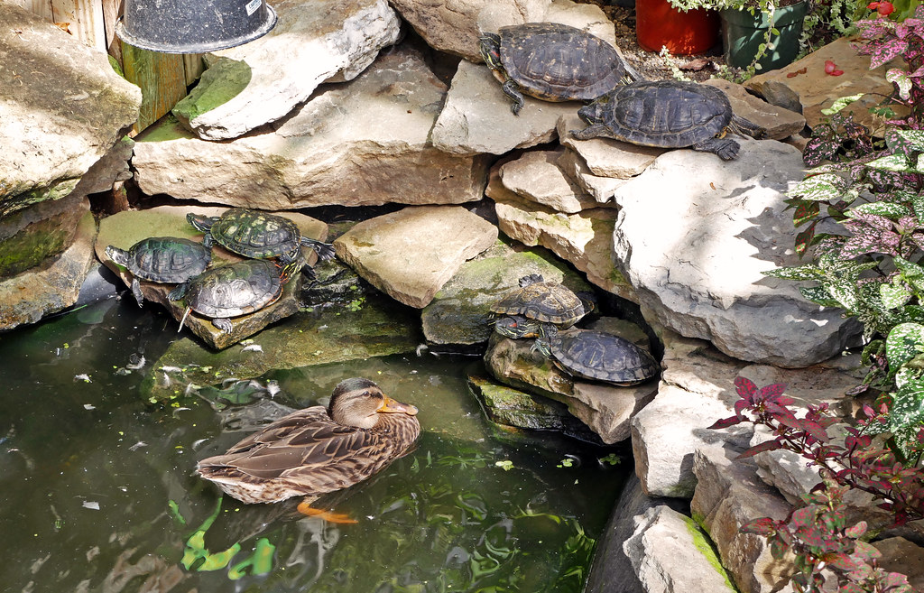 R Turtles Lucky The World's Best Photo...