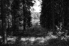(hannasamuelsson) Tags: water lake swimming sport nature symmetry art photography path flowers trees wood sweden scandinavia europe stockholm countryside peaceful adventure sightseeing