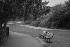 Sunday afternoon walk, Barry Island, Wales (Dai Lygad) Tags: flickr noiretblanc park trees path paths bench benches empty emptybench parkbench barryisland wales weekend