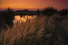 End of summer (frantiekl) Tags: dusk twilight sky wey landscape lagoon evening eveningmood summer september bright brightsky bohemia blovice czechrepublic